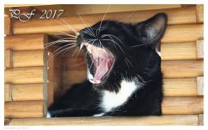 PF 2017 zdarma ke stažení